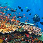 Destination-Flores-Komodo-dive-cruise-indonesia-komodo-diving