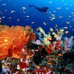 Cheng Ho boat liveaboard diving cruise indonesia