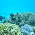 Destination-Sumbawa-dive-cruise-indonesia-Sumbawa-Moyo-diving-Indonesia